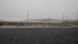 春のぼた雪